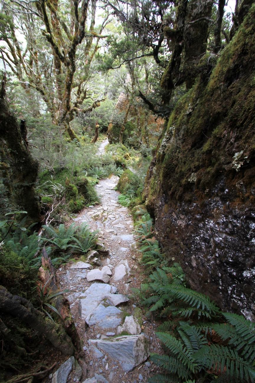 Routeburn Track + Milfourd Sound